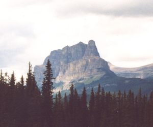 mountains, tree, and forest image
