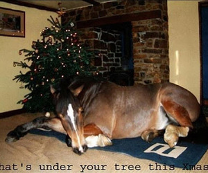 horse and christmas image