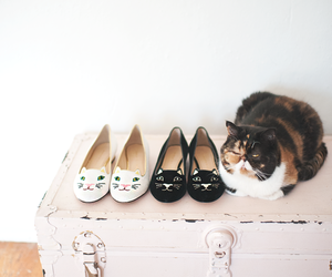 cat, shoes, and animal image