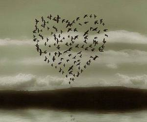 bird, heart, and love image