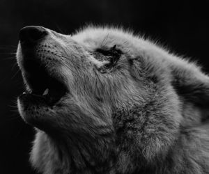 animal, black and white, and varnuak image