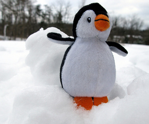 penguin, snow, and cute image
