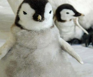 penguin, sweet, and cute image