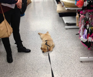 dog, funny, and shopping image