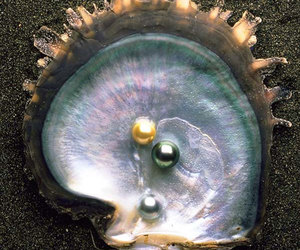 pearls, sea, and shell image