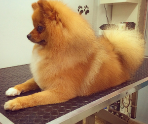 dogs, grooming, and pets image