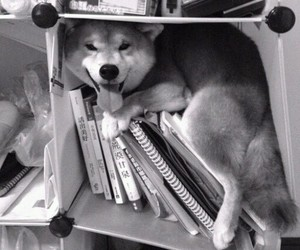 dog, animal, and book image