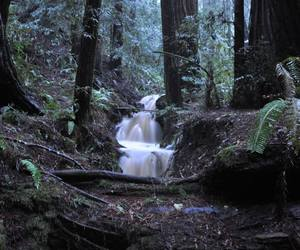 forest, nature, and waterfall image
