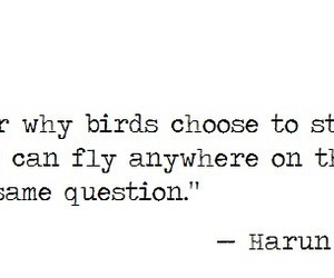 bird and quote image