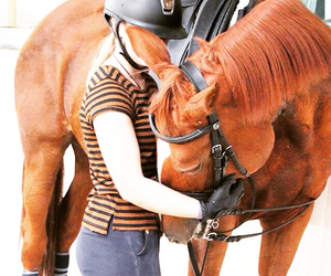 dressage, horses, and mare image
