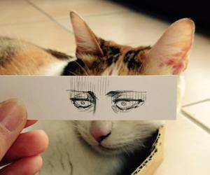 cat, eyes, and levi image