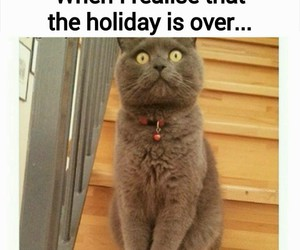 holiday, cat, and funny image