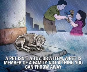 pet, family, and toy image