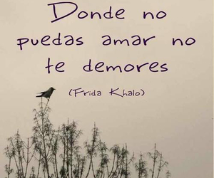 frases, Frida Khalo, and Frida image