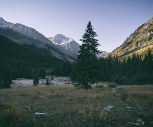 analog, nature, and trees image