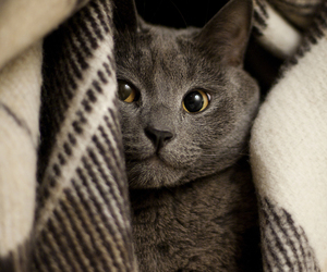 cat, eyes, and grey image