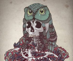 art, owl, and skull image