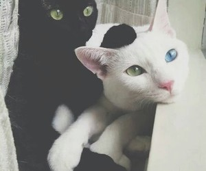 black, blue, and white image