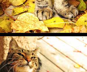 autumn, cat, and gold image
