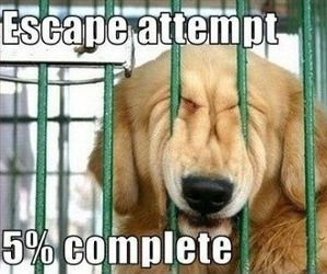 funny, dog, and escape image