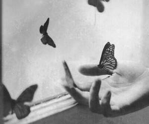 beauty, black and white, and butterflies image