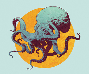 octopus, sea, and squid image