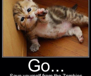cat, funny, and zombies image