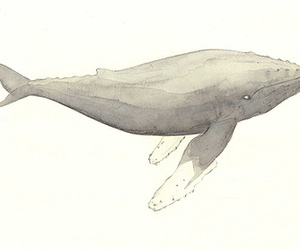 drawing and whale image