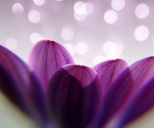 flower, background, and purple image