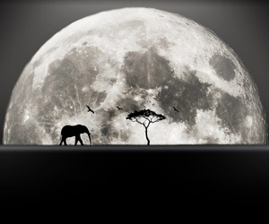 black and white, elephant, and moon image