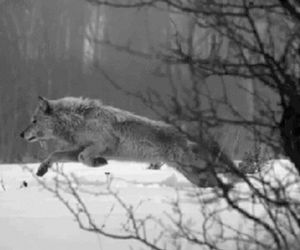 life, snow, and wolf image