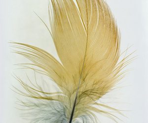 feather, photography, and pretty image