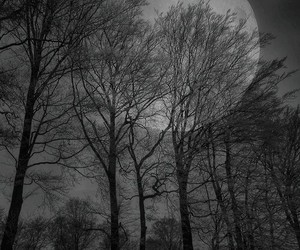 moon, tree, and forest image