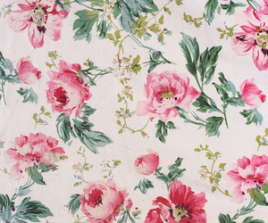 floral, pink, and roses image