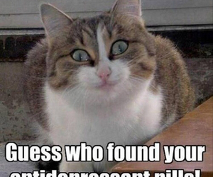 cat, funny, and pills image