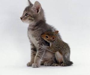 cat, squirrel, and cute image