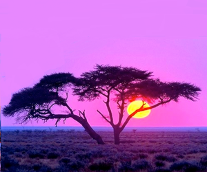 tree, pink, and sunset image