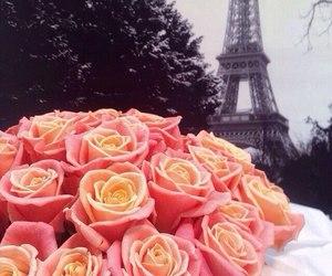 paris, roses, and cute image