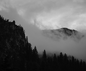 beautiful, black and white, and nature image