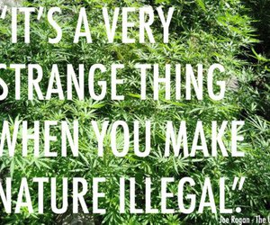 weed, nature, and text image