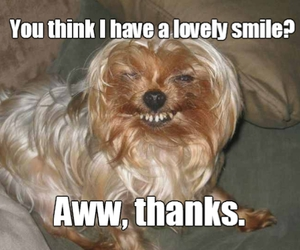 compliment, lol, and smile image