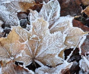 winter, leaves, and snow image