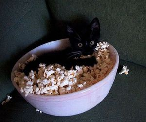 cat, cute, and popcorn image