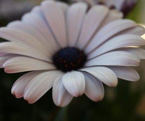 flower, purple, and beautiful image