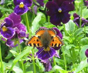 butterfly, flowers, and violets image