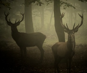 autumn, deer, and fog image