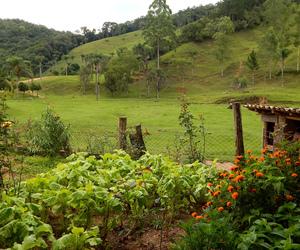 adventure, farm, and flowers image