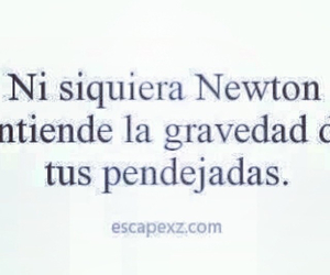 frases, newton, and pendejo image