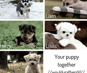 puppies, one direction, and 1d image