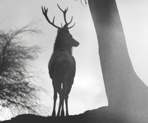 deer, black and white, and animal image